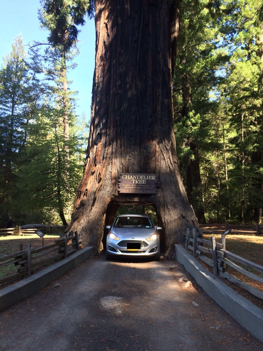 Days 56 58 of usa road trip north california and oregon gluten we drove along avenue of the giants a vast tree lined area with gorgeous views attractions and hiking trails we saw chimney tree a tree with a hole all arubaitofo Gallery